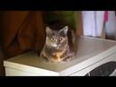 Приколы с котами,котятами и другими животными 20 Jokes with cats, kittens and other animals
