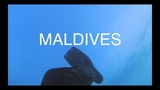 Diving in Kuda Bandos Maldives - sharks, turtles, moray eels