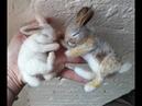 DIY Sleeping Wild Bunny Rabbit - The Wishing Shed