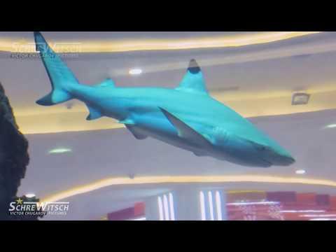 МОСКОВСКАЯ АКУЛА (Видео)