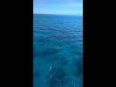 Дельфины. Красное море