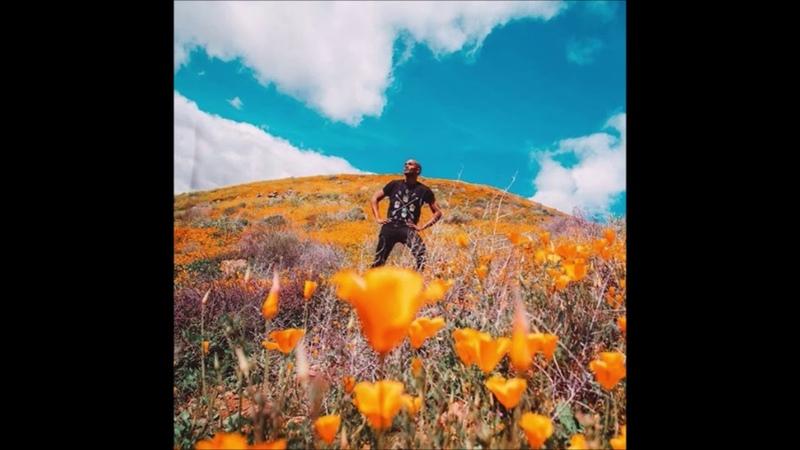 Коллапс в США. Почему зацвели пустыни. К чему это привело. Коллапс в калифорнийском городе.