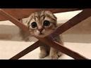 Gatti pazzi ✪ Gatti divertenti ✪ Prova a non ridere