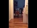 собака проходит мимо спящего кота