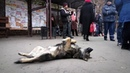 Собака-дворняга слушает скрипку. Краматорск, Донецкая область. Ноябрь 2018