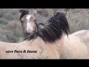 Leo Rojas - You Sang To Me
