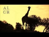 Yolanda Be Cool Ft. Kwanzaa Posse - Musika (Extended Mix)
