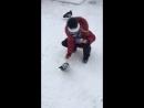 Кормление мурманских голубей