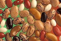 Разница между бобами и фасолью Бобовые удивительная культура, которая представлена большим разнообразием видов: это и знакомый нам всем горошек, и фасоль, и модная нынче чечевица, и много других
