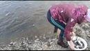 лов корюшки камчатка : ulov-