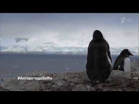 Антарктида. Селфи - [Full HD 1080i]