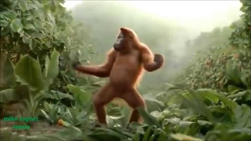 فيديو مضحك الحيوانات عندما ترقص 😂 ههههههه