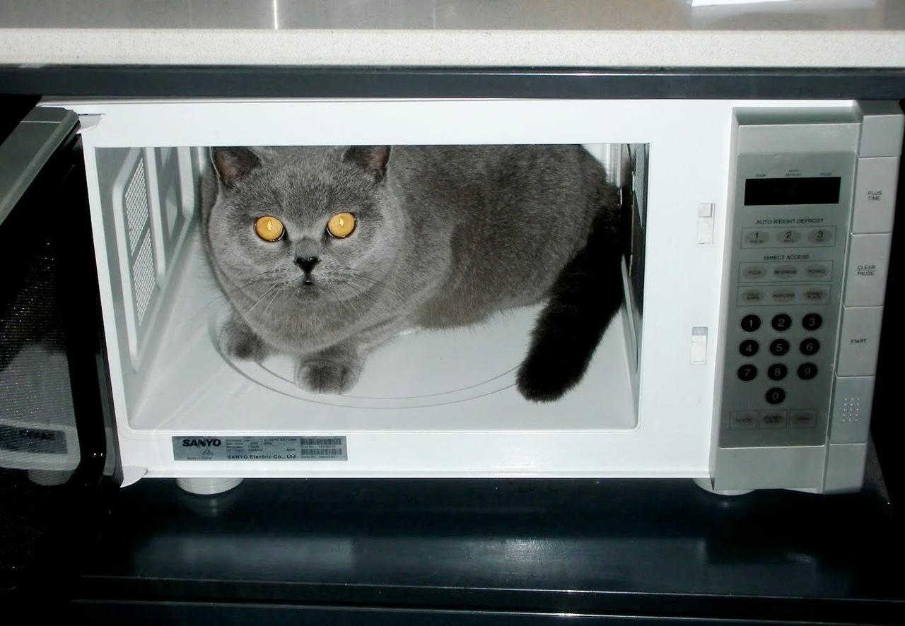 Микроволновка смешные картинки
