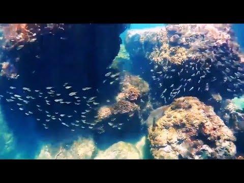 Nghèo Travel Vlog - Nướng thịt bò bít tết và lặn san hô tuyệt đẹp tại Ghềnh Bàng - Đà nẵng
