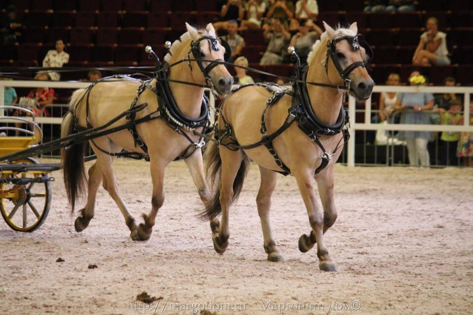 """Мастер-класс """"Подготовка молодой лошади к заездке в экипаж"""" JZ_MoYV-EQc"""
