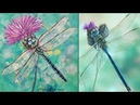 Dragonfly Thistle Acrylic Painting LIVE Instruction