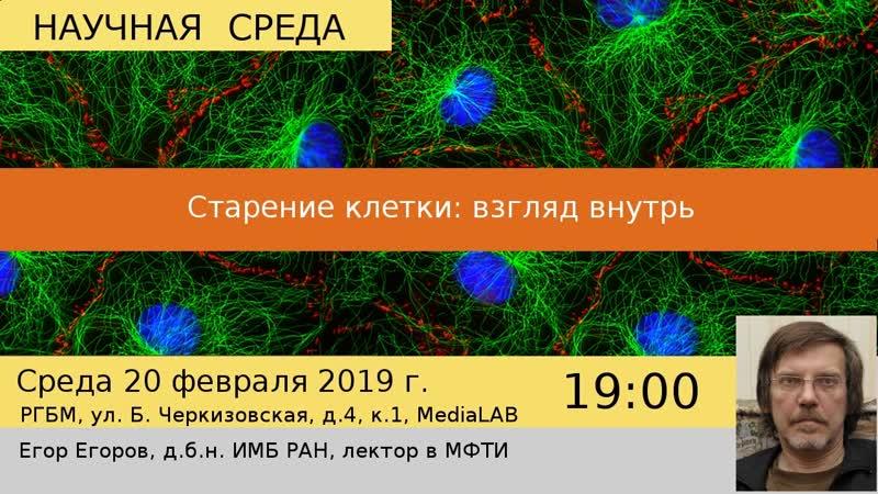Лекция Старение клетки взгляд внутрь Егора Егорова