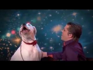 Canine Lady Xena Sings Whitney... - Got Talent Global