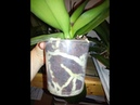 Орхидеи сюрпризы от 250 до 350всегда в наличие В отличном состоянии отправка по всей России