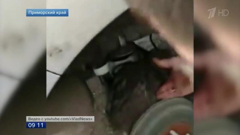 Во Владивостоке спасли котенка который совершил экстремальную поездку на подвеске автомобиля