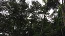 Micos Assustados. Quntal, Tiguera 360, Juiz de Fora, Brasil. IMG_8371. 66,2 MB. 16h40. 25jun18