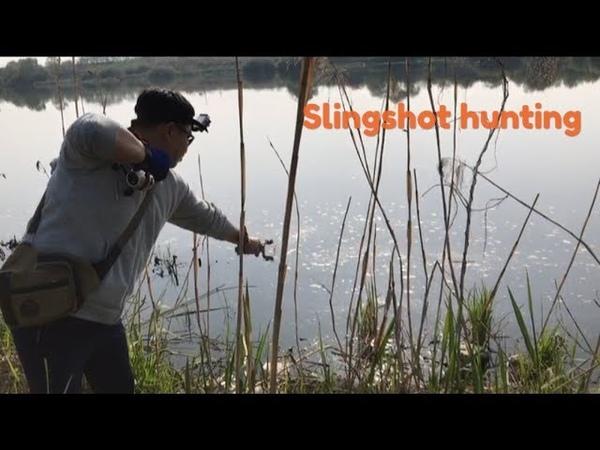 СТРЕЛЬБА ПО КАРПУ С РОГАТКОЙ SLINGSHOT FISHING
