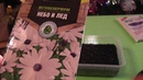 Посадка и выращивание цветов остеоспермум ч 1
