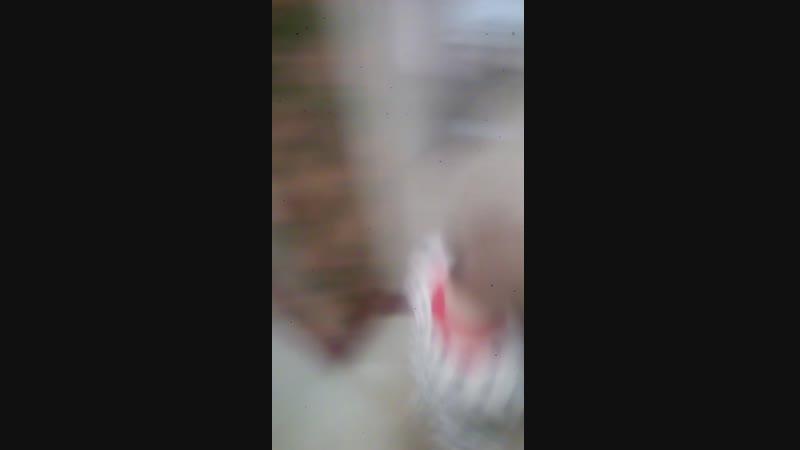 15.12.2018 Александр танцует с котёнком Мила. Лапочку ни разу не брал ещё на руки