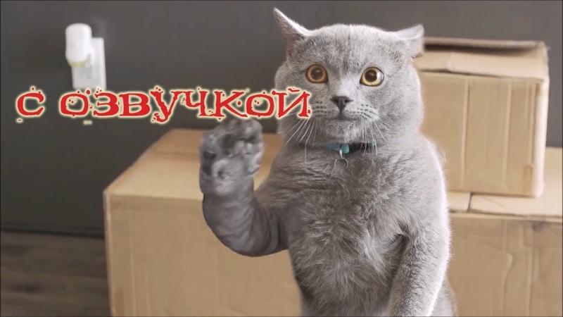 Приколы с котами – озвучка животных – кот говорит от Domi show