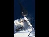 необычный Гость на рыбалке