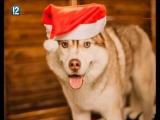 В Омске догхантеры отравили лечившего детей пса