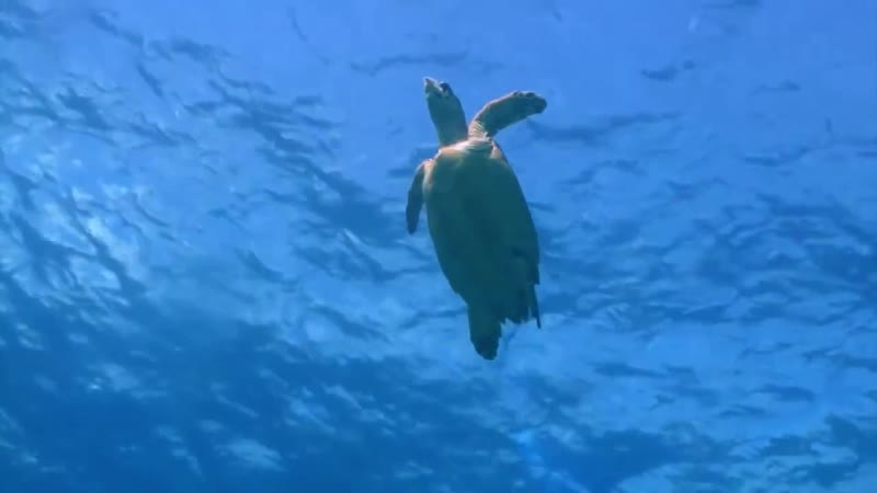 Luz Calor Som - Dolphins And Sea Turtles
