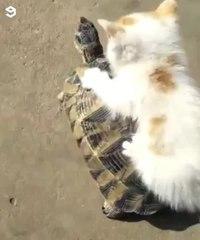 Kitty riding 🐱🐢🏇 · #coub, #коуб