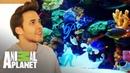 ¡Prince Royce consigue un acuario con peces de la realeza! Con el agua al cuello Animal Planet