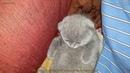 Мой котенок развлекается перед сном 🔴 😻