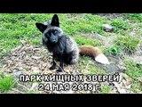 ПАРК ХИЩНЫХ ЗВЕРЕЙ 24 МАЯ 2018 Г.