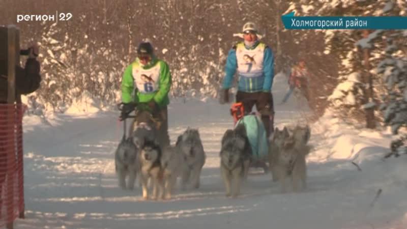 Фестиваль ездового спорта Поморские кудесы прошёл в Холмогорах
