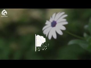 Әйел жүрегінің кілті - Жаңа ролик - Асыл арна_HIGH.mp4