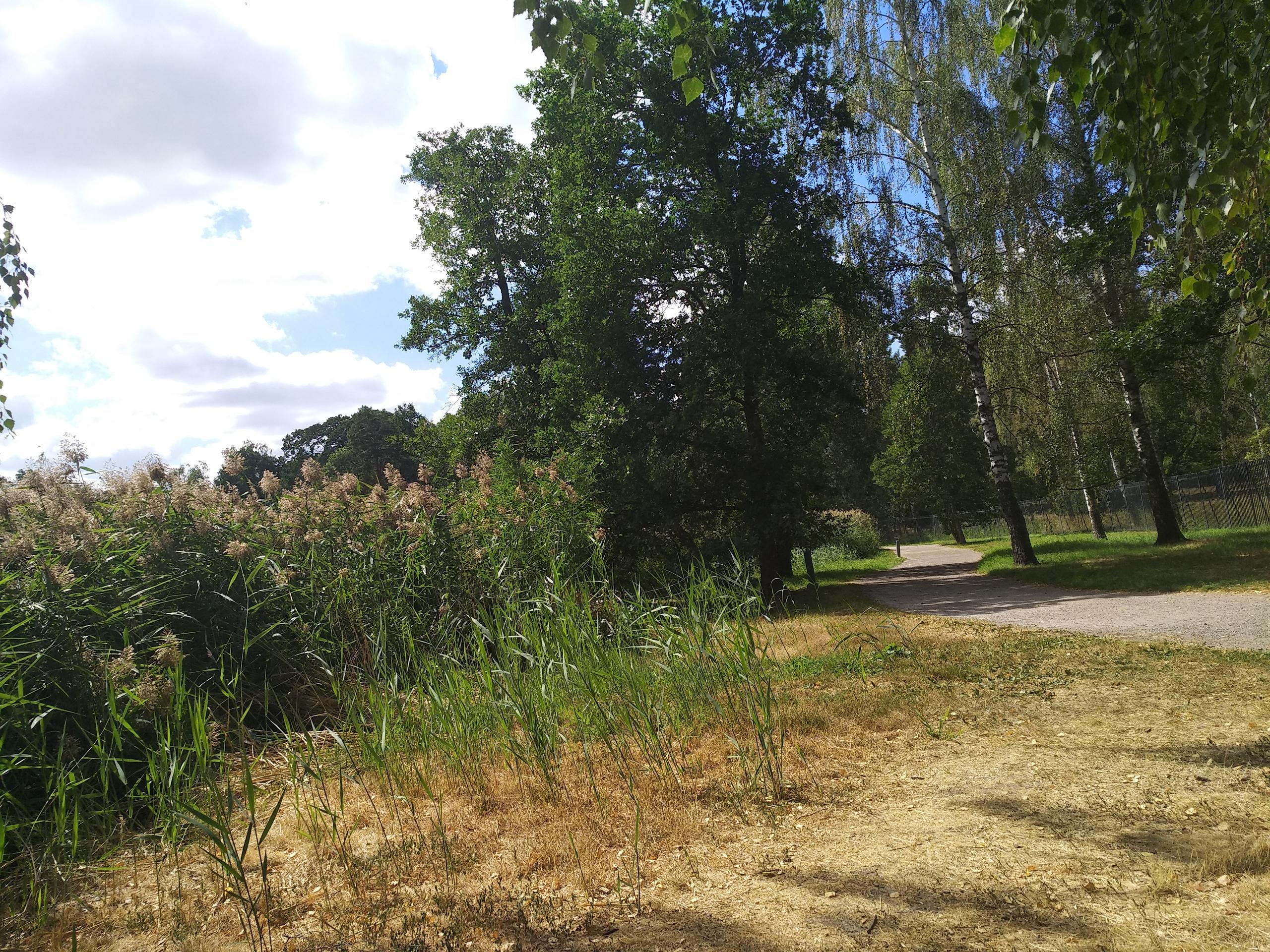 Хага парк: потому что нельзя быть на свете красивым таким... парка, минут, Здания, некоторые, больше, Депре, отсюда, также, короля, только, Здесь, густой, здесь, здания, Густава, очень, шатров, время, Королевский, добраться