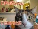Приколы про котэ с ОЗВУЧКОЙ Смешные коты и кошки 2018 Лучшие приколы с котами