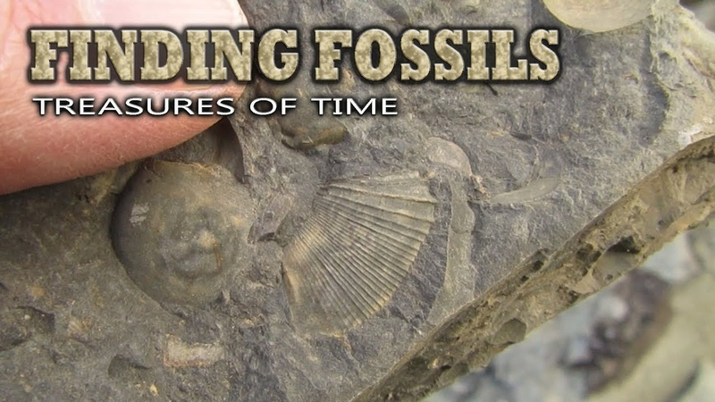 Finding Fossils - Treasures of Time
