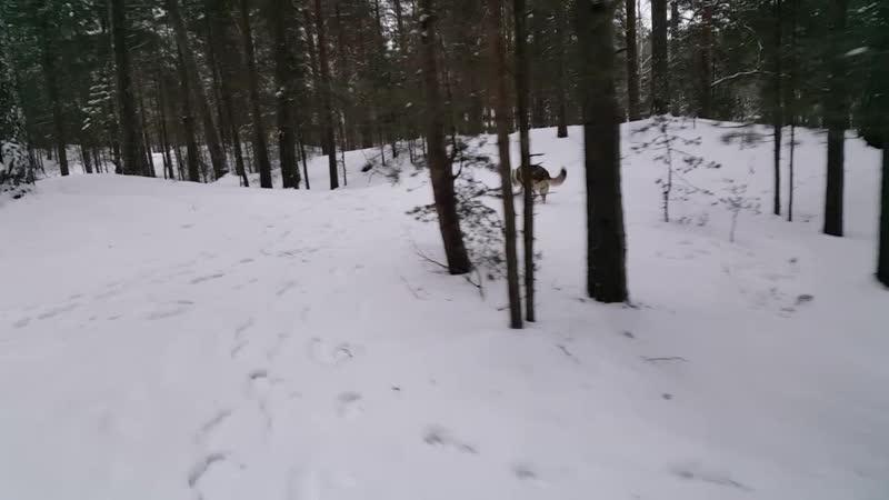 Январь Рождество Парк Белые пески
