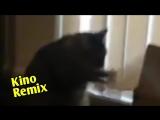фильм одержимость kino remix 2018 2 угар ржака коты смешные приколы с животными кот рокки
