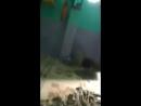 G-Sarwar Shakh - Live
