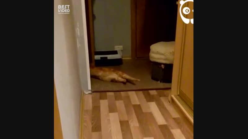 И с котами тоже бывает весело 😸