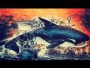 Смерть среди айсбергов Orca the Killer Whale 1977