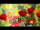 Есть на свете цветок алый, алый. Песню поет Клара Румянова.