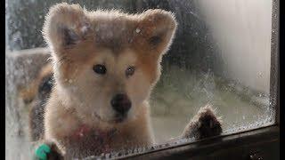 Почему Японцы Убивают Собак и Кошек