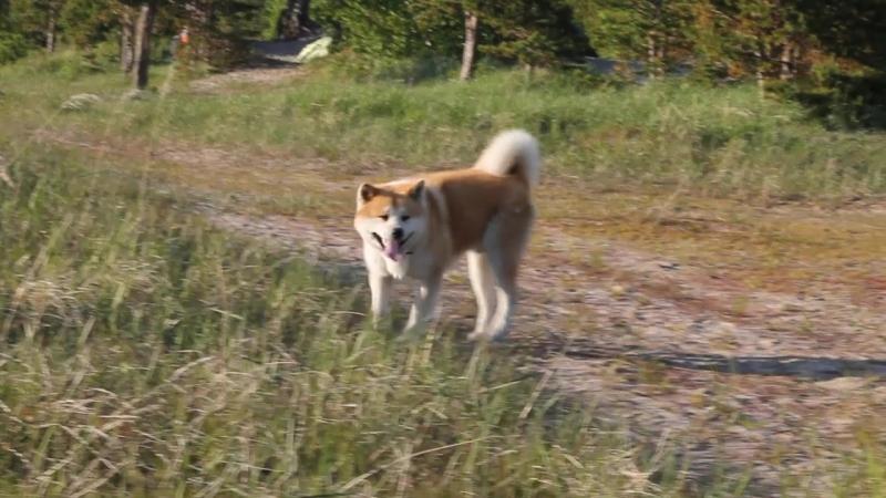 Конкурс - «Главная собака Северодвинска». Номинация: ПЕС и КОТ.