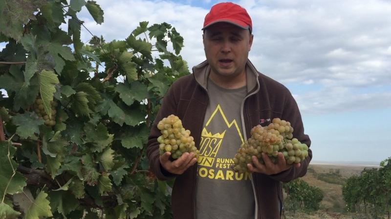 Виноградная плантация, Дагестан. Сок 250₽/литр